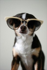 dog awww 17