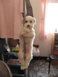 dog awww 20