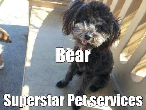 Dog Sitter Las Vegas