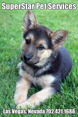 Pet Sitting SuperStar Pet Services