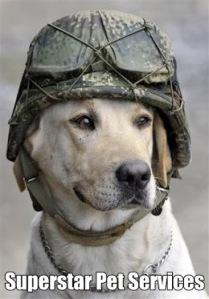 dog cute 2 (1)