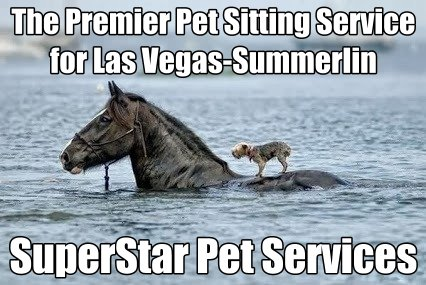 The Premier Pet Sitting Company for Las Vegas