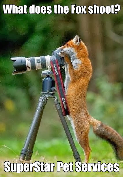 What does the Fox shoot?
